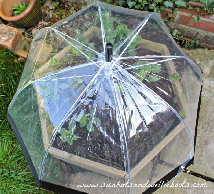 парник зонтик купить